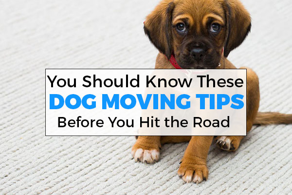 dog, moving, tips, victoria