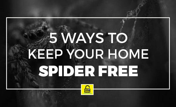spiders, home. tips
