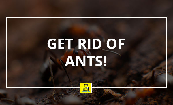 remove ants, bugs, insects